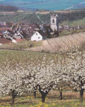 The new village appellation Irancy in Burgundy