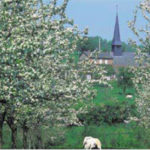 Normandy lush landscape, pastures and meadows